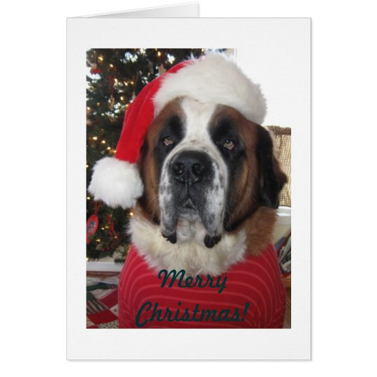 Santa St. Bernard Dog Christmas Card