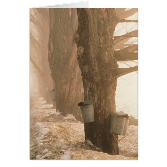 Sap Buckets Note Card