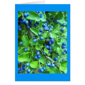 Sapphire Berries Card