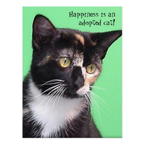 Sara - Happiness is an adopted cat! Postcard
