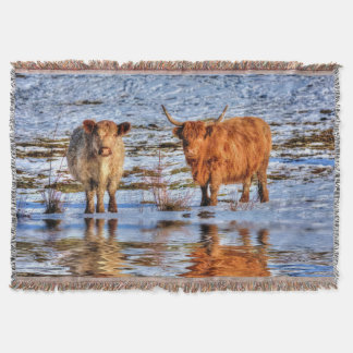 Sarah & Hamish - Highland Cattle in Snow