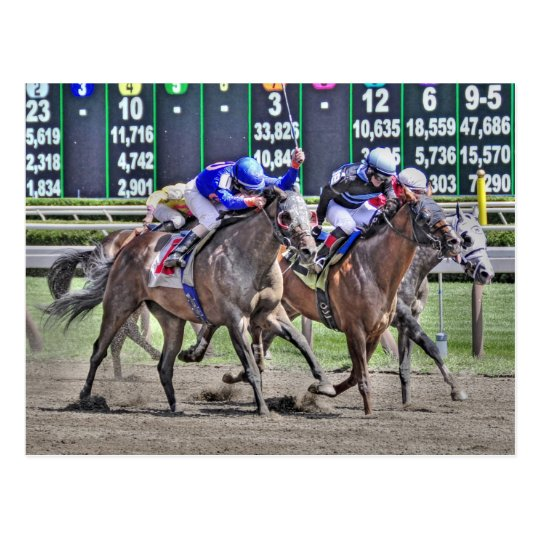 Saratoga Horse Racing Postcard