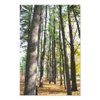Saratoga Spa State Park Pines Photo Print