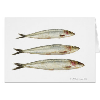 Sardines (Pilchards) 2 Card