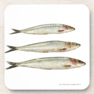 Sardines (Pilchards) 2 Coaster