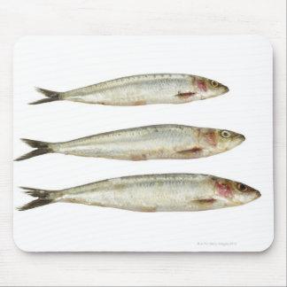 Sardines (Pilchards) 2 Mouse Mat