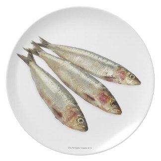 Sardines (Pilchards) Plate