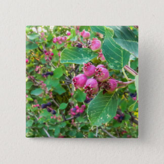 Saskatoons Square Button