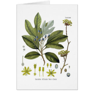 Sassafras officinale greeting card