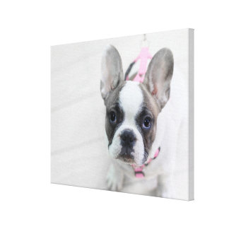 Sassy French Bulldog Canvas Print