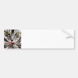 Sassy Little Cat - Flirty Kitty Bumper Sticker