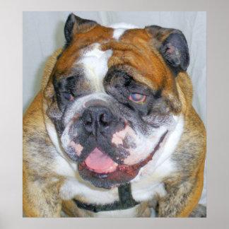 Sassydog the Bulldog Poster