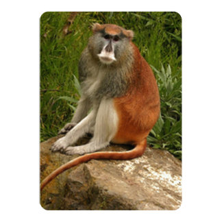 Saturated Patas Monkey With Long Tail 13 Cm X 18 Cm Invitation Card