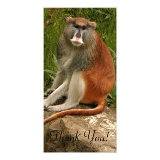 Saturated Patas Monkey With Long Tail Picture Card