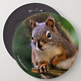 Saucy Red Squirrel in the Fir 6 Cm Round Badge