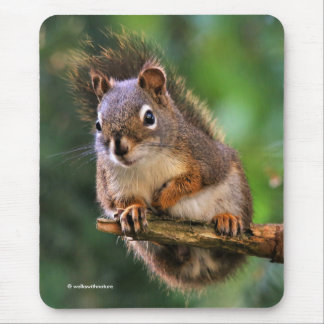 Saucy Red Squirrel in the Fir Mouse Mat