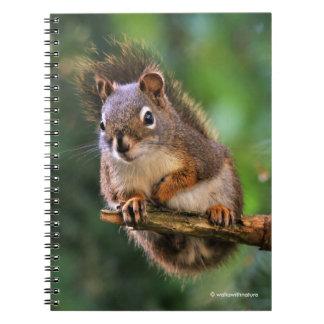 Saucy Red Squirrel in the Fir Spiral Notebook