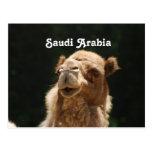 Saudi Arabian Camel
