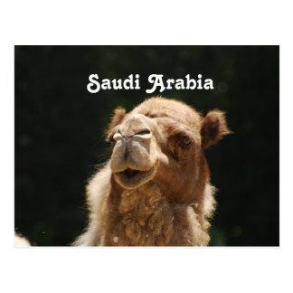 Saudi Arabian Camel Postcard
