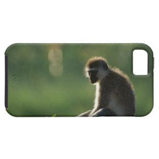 Savanna Monkey iPhone 5 Cases
