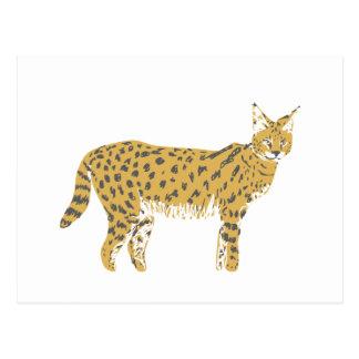 savannah cat postcard