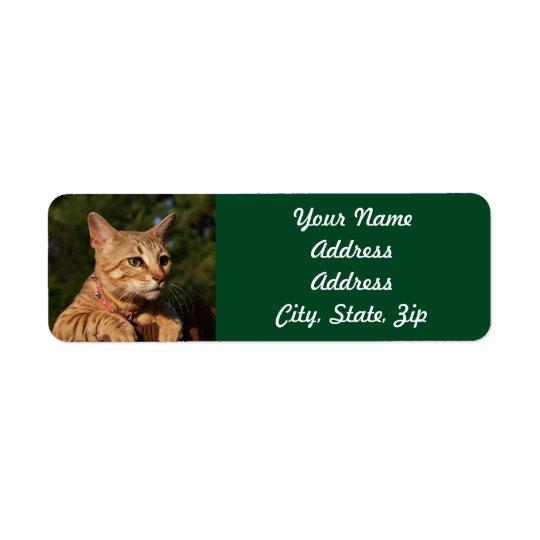 Savannah Cat Return Address Sticker