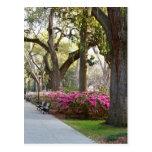 Savannah Georgia in Spring Forsyth Park Azaleas Oa Post Card