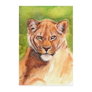 Savannah Lioness Acrylic Print