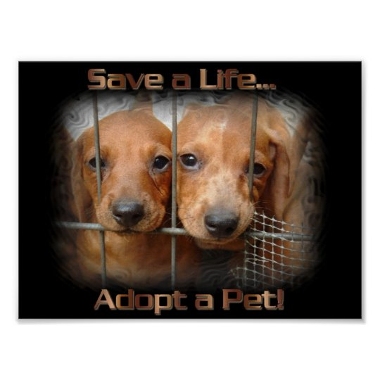 save a life and adopt from an Adopt and save a life essay 1553 words | 7 pages though we do not realize many animals have a life as this dog has had studies show that more animals in the united states are being euthanized every day due to the fact of overpopulation of animals, serious injury or diseases, puppy mills and natural disasters.