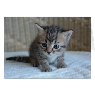 Save a life, adopt a rescue cat greeting card