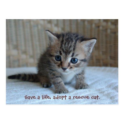Save a life, adopt a rescue cat. postcard