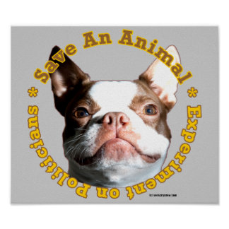 Save An Animal-Dog Poster