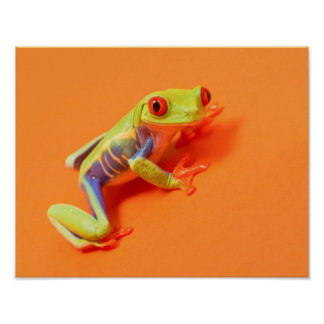 Save eye tree frog on orange poster