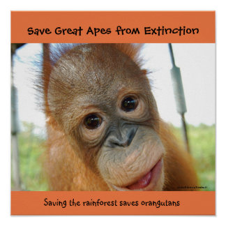Save Great Apes Poster