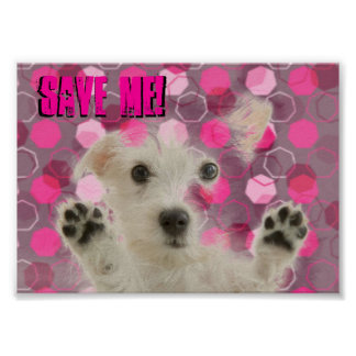 Save Me Dogs Poster