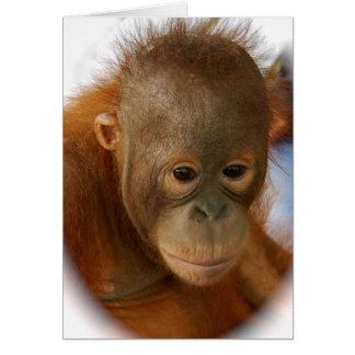 Save Orangutans from  Extinction Card