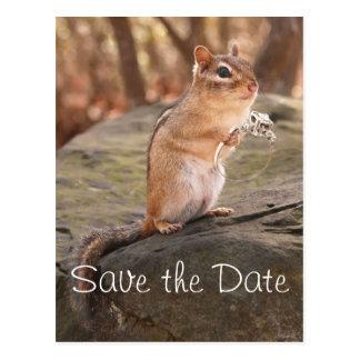 Save the Date Chipmunk Postcard