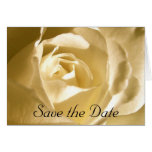 Save the Date Cream Rose Photo Greeting Cards