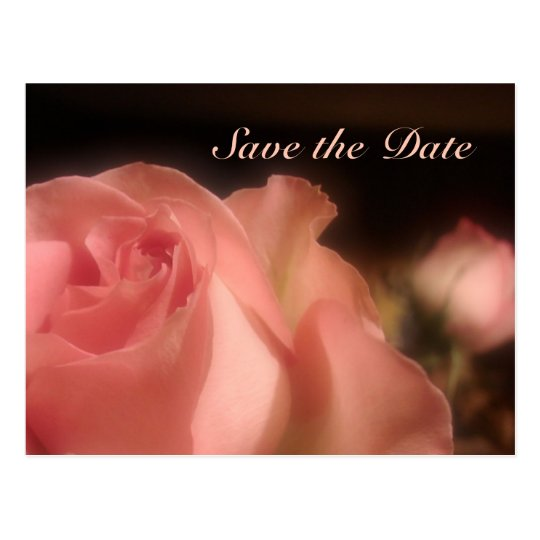 Save the Date - Peach Rose Postcard