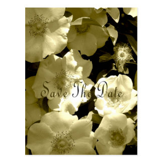 Save The Date postcard White Climbing Roses