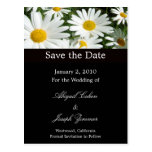 Save the date postcards, daisies