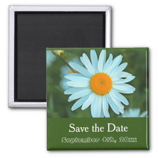 save the date, pure white daisy flower green square magnet