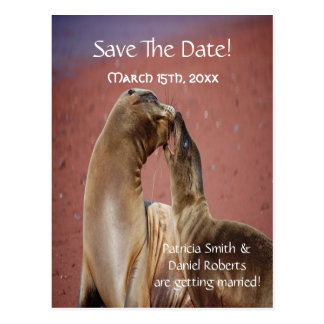 Save The Date Sea Lions Postcard