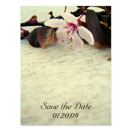 Save the Date Vintage Cherry Blossom Postcard