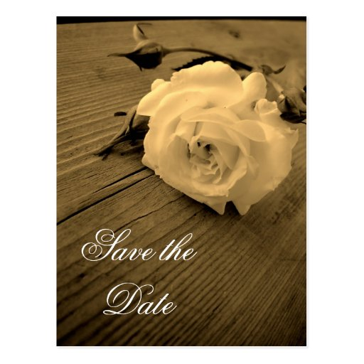 Save the Date Vintage Sepia White Rose Postcard