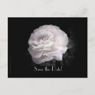 Save the Date Vow Renewal Ceremony Pale Pink Rose Announcement Postcard