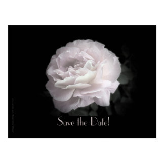 Save the Date Vow Renewal Ceremony Pale Pink Rose Postcard