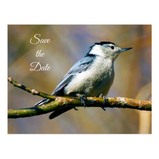 Save the Date White Breasted Nuthatch Postcard