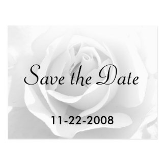 Save the Date White Rose Post Card