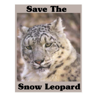 Save the Snow Leopard Postcard